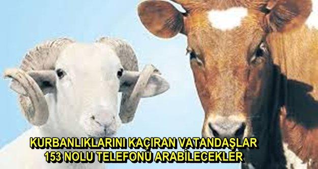 KURBAN KESİM YERLERİ BELLİ OLDU