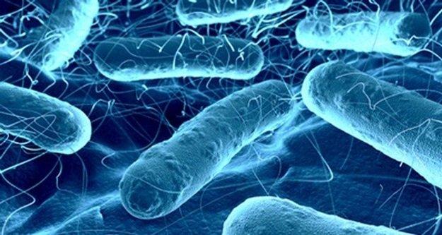 Vücudumuzda 90 trilyon mikrop taşıyoruz