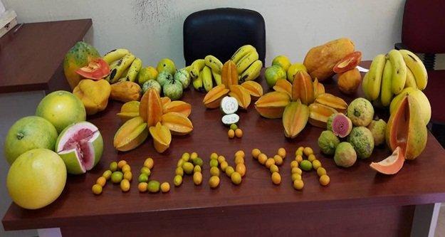 24 çeşit tropik meyve üretiyoruz