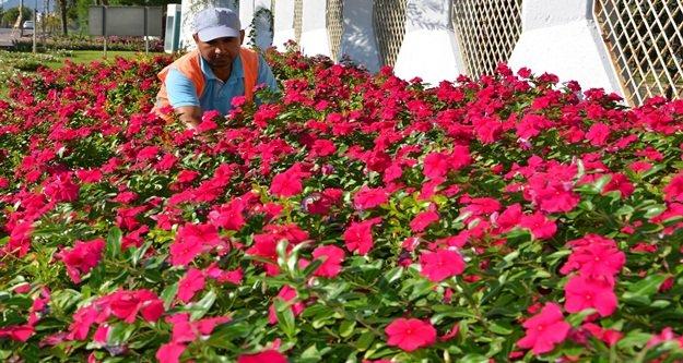 Alanya'ya 200 bin çiçek