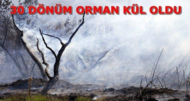 Torpil orman yaktı