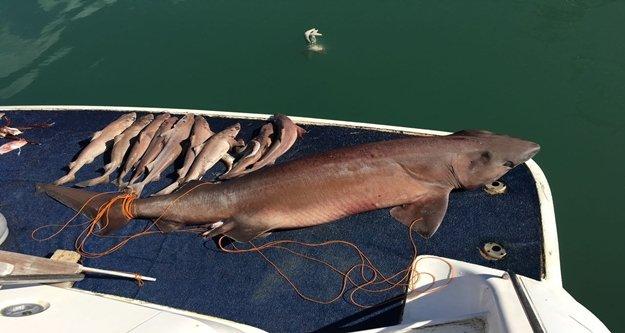 14 köpek balığı yakalandı