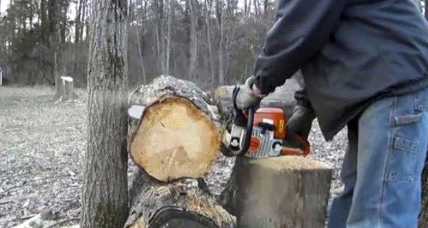 Ağaç yerine elini kesti