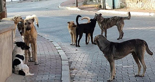 Ölüme terk edilen sokak köpeklerini belediye kurtardı