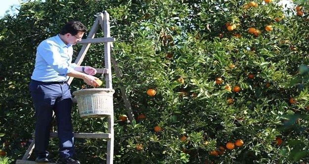 Şimdi portakal zamanı