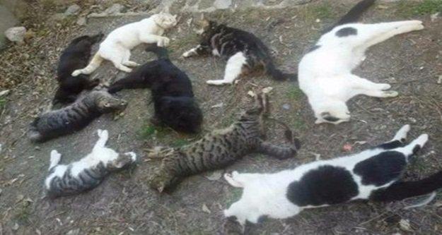 Alanya'da 25 kedi katledildi