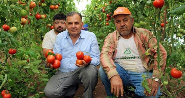 Çiftçi isyanda: Zararına satıyoruz