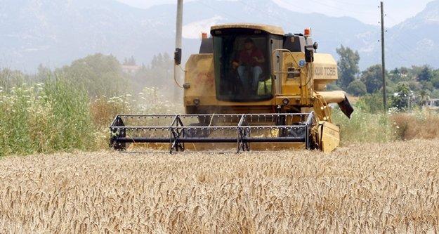 Buğday üreticisinin imdadına ANTBİRLİK yetişti