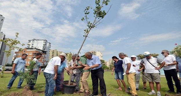 Atom bombasına direnen ağaç Antalya'da kök salacak