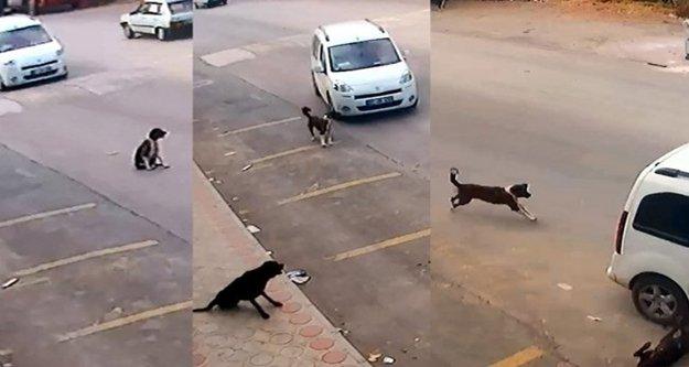 Köpeği ezen sürücü yakalandı