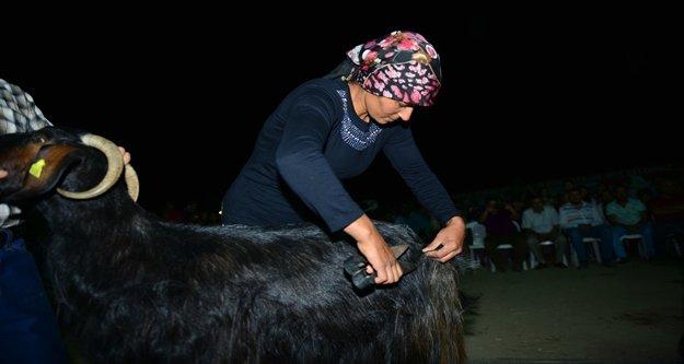 Yayla şenliğinde keçi kırkma yarışması