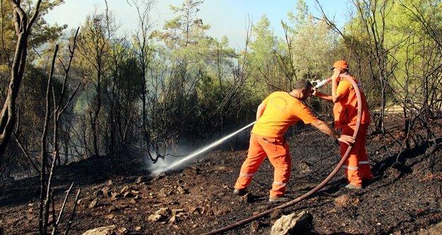150 zeytin ağacı yanarak küle döndü