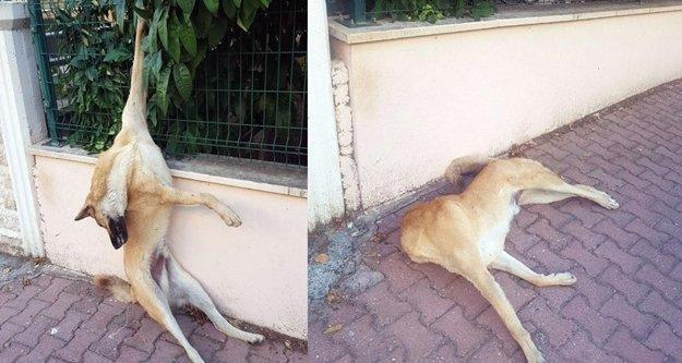 Dört yıldır beslediği köpeği bahçe korkuluklarına asılı buldu