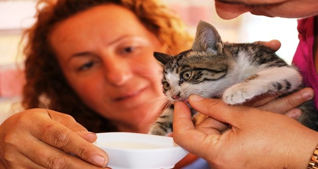 Mahsur kalan yavru kedi, cep telefonundaki kedi sesi sayesinde kurtarıldı