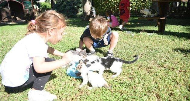 Miniklerden Kedi Parkı'na yoğun ilgi