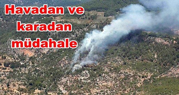 Panik! Alanya#039;da orman yangını
