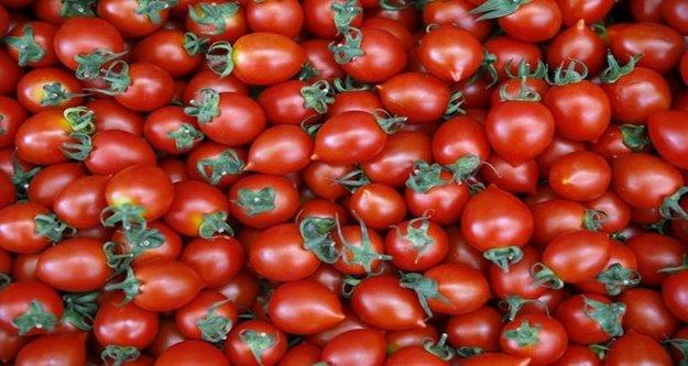 Rusya'dan üreticiye domates müjdesi