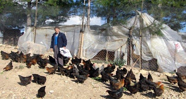 Son maaşı ile 100 tavuk alıp çiftlik kurdu, talebe yetişemiyor