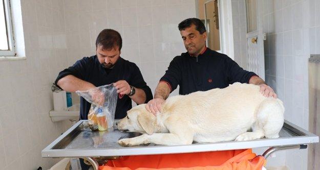 Gazipaşa'da sokak hayvanlarına sağlık kontrolü