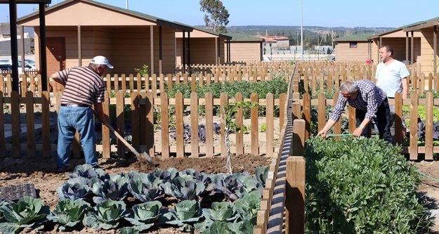Büyükşehirin Hobi Bahçesinde emekliler ilk hasadı yaptı