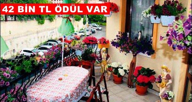 'En güzel balkon, bahçe ve hobi bahçesi' yarışması başlıyor