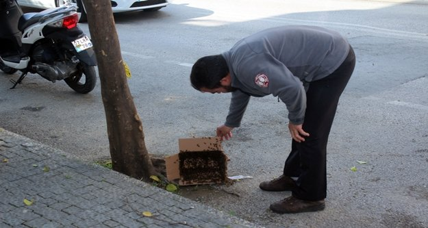 Arılar caddeyi istila etti