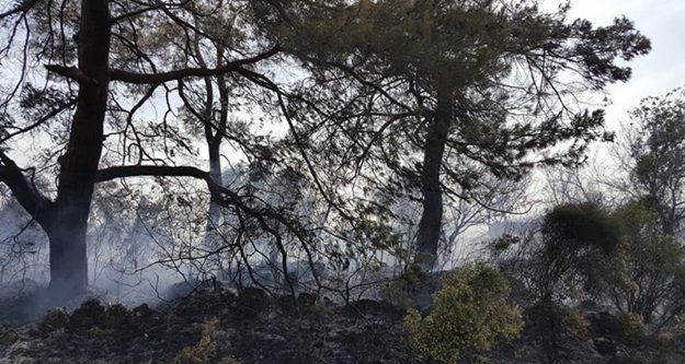 Orman yangını seralara sıçramadan söndürüldü