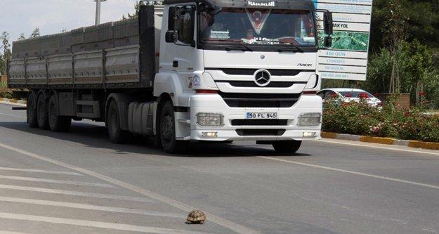 Sürücünün kaplumbağa duyarlılığı