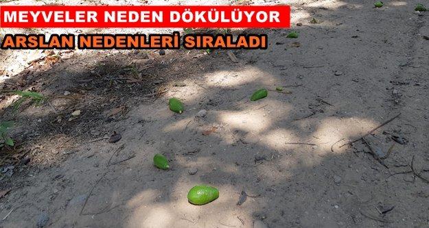 Arslan'dan meyve dökümü uyarısı