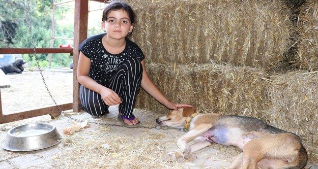 Göğsü keskin cisimle yarılmış halde bulunan köpek tedavi altına alındı