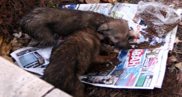 Düştükleri su kanalından kurtarılan yavru köpeklerin anne sevinci
