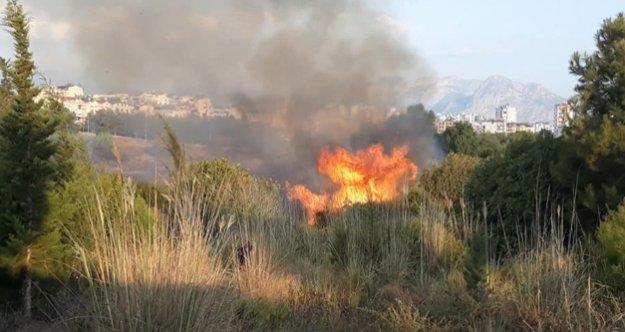 Konyaaltı sahiline yakın alanda orman yangını
