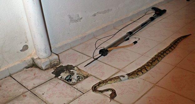 Evde yılan besleyen komşuya ceza