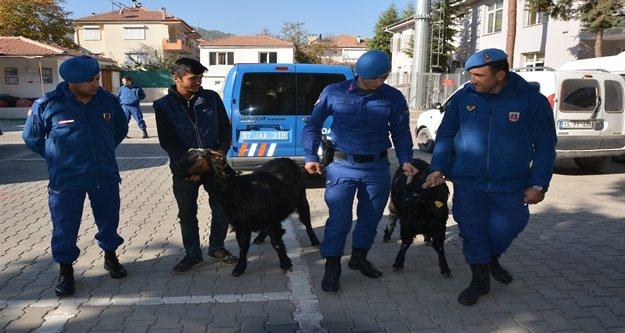 Jandarma keçi hırsızlarını yakaladı