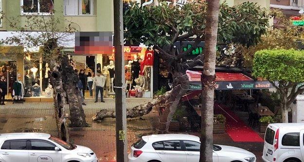 Alanya'da fırtına sonrası restoranın üzerine ağaç devrildi