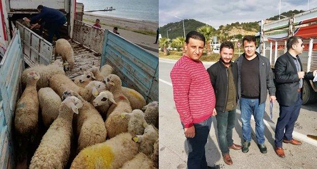 Alanyalı genç çiftçilere hayvanları teslim edildi
