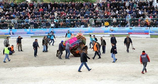 Ege ve Akdeniz'in en ünlü 110 devesi mücadele etti