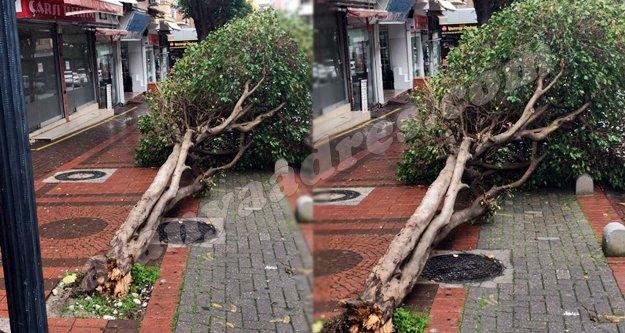 Alanya'da Hayate Hanım Caddesi yerle bir oldu!