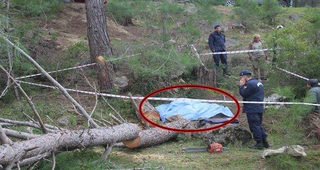 Kestiği ağacın altında kalan adamın feci sonu!