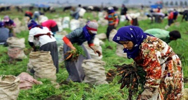 TÜİK mevsimlik kadın işçilerin ücretlerini açıkladı