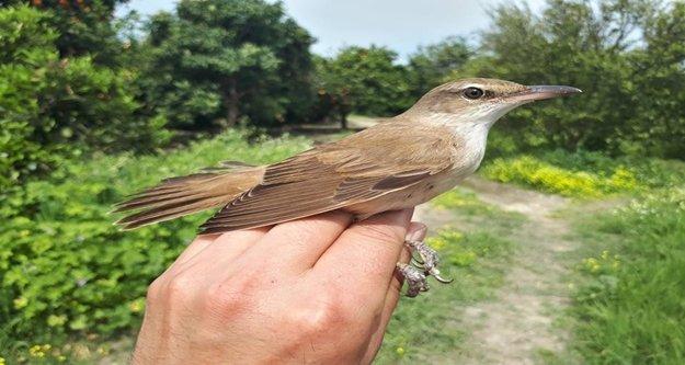 Öğrencilere kuş halkalamanın önemi anlatıyor