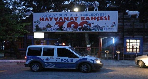 Polis hayvanat bahçesinden kaçan kurtu arıyor