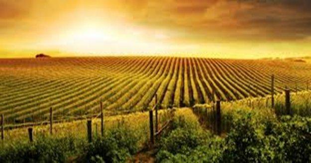 Devlet destekli tarım sigorta bedelleri 2018 yılında arttı