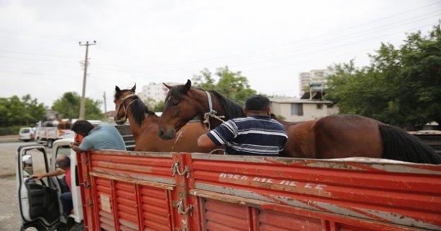 Fayton dönemi sona erdi, atlar hayvanat bahçesine teslim edildi