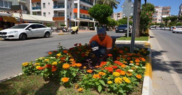 Alanya'ya 200 bin adet yazlık çiçek