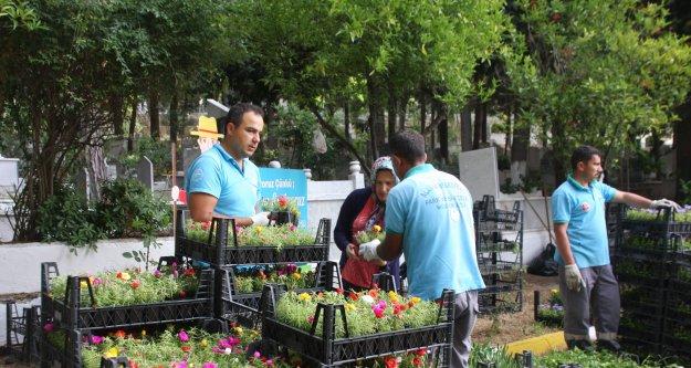 Alanya Belediyesi 21 mezarlıkta 55 bin çiçek dağıtacak