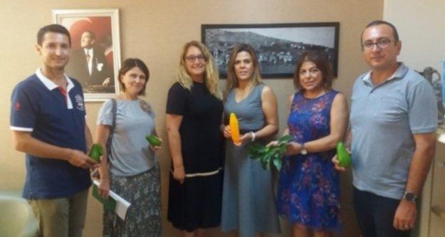 Alanya'da Avokado festivali hazırlıkları sürüyor
