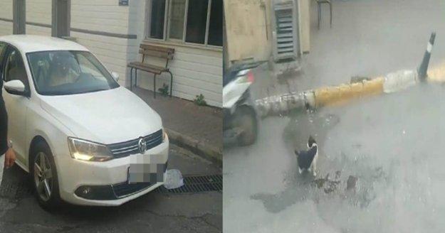 Yol ortasında su içen kediye, sürücüden örnek davranış
