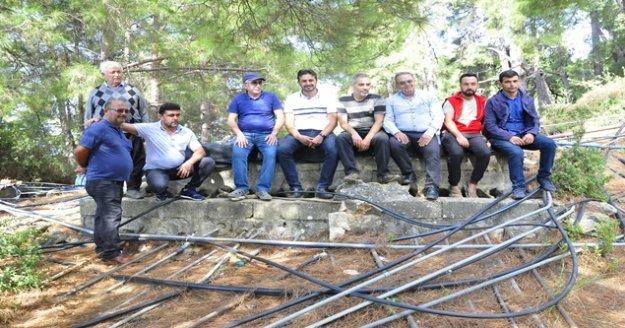 Gazipaşa'da  Muz üreticileri susuzluk sebebiyle üretimi bırakıyor
