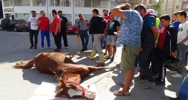 İpinden çözülen at minibüse çarpıp ağır yaralandı